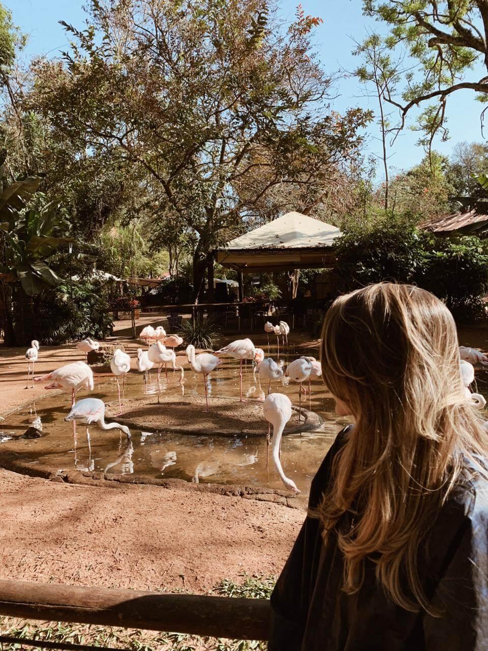 Manuela Brasão no Parque das Aves em Foz do Iguaçu com flamingos do parque ao fundo.