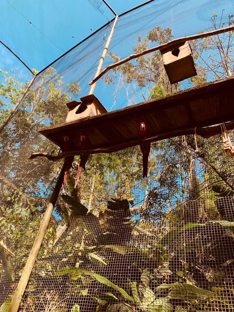 Araras do Parque das Aves em Foz do Iguaçu e suas casinhas dentro de sua jaula.