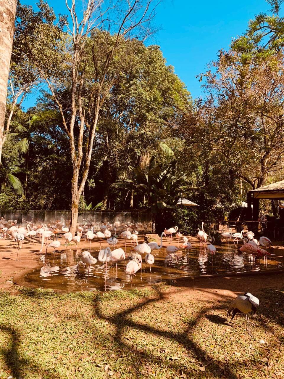 Flamingos do Parque das Aves em Foz do Iguaçu.